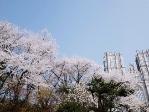 【成功案例】出身校一般口語不好如何去慶熙大學讀研?